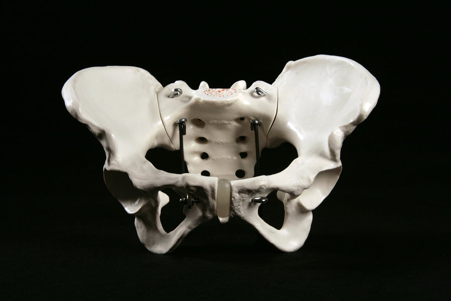 360 View Human Pelvis Female Low Angle View