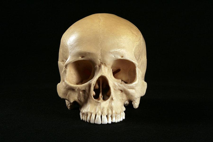то, формы норм черепа человека фото очень вкусный полезный