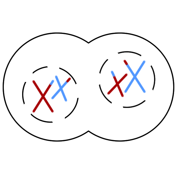 Differences between mitosis and meiosis venn diagram vatoz differences between mitosis and meiosis venn diagram ccuart Image collections