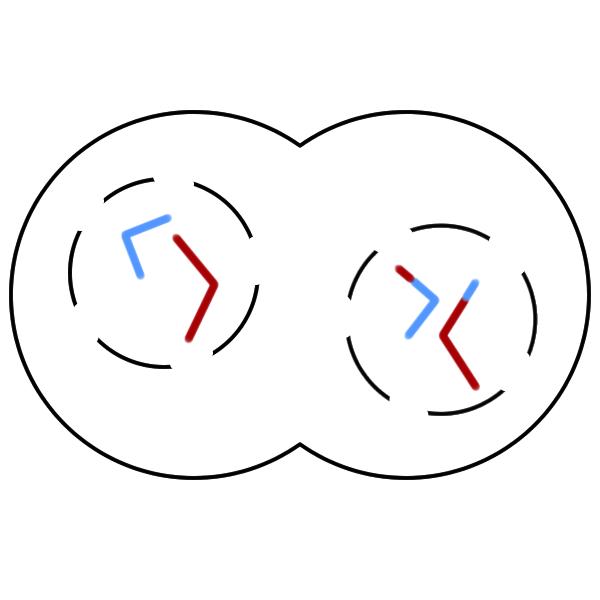 Telophase Diagram