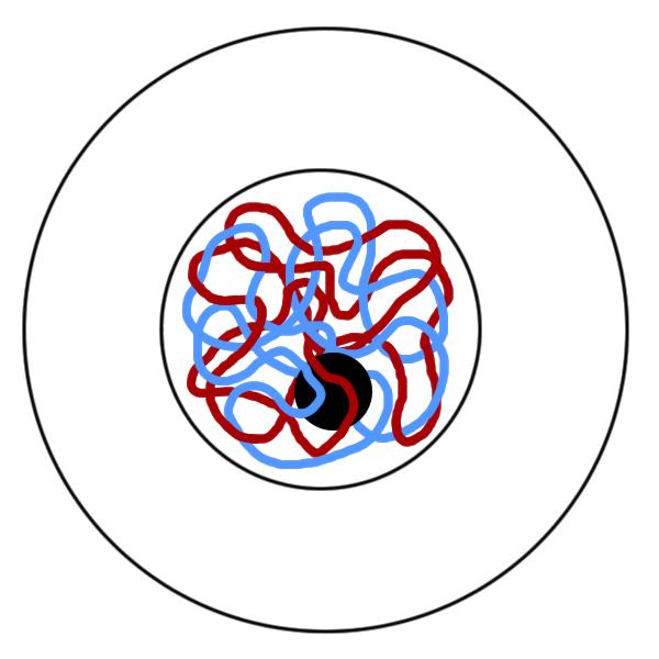 diagram biology meiosis worksheet answer key mitosis vs meiosis ...